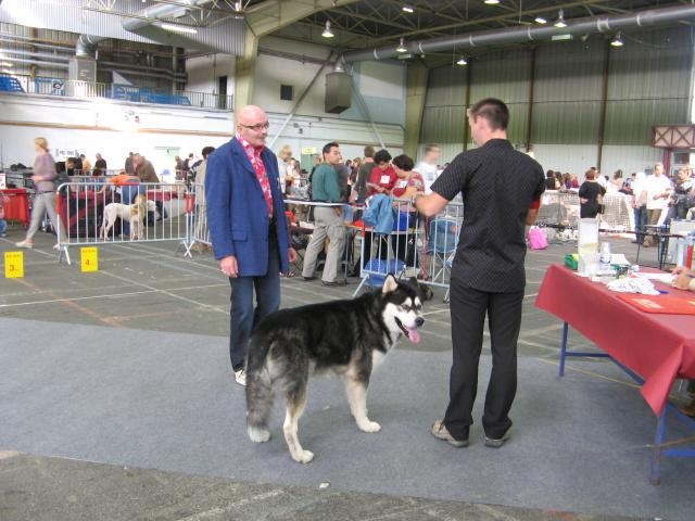 Dog show with Malamutes - De la Coleen d'Urok - The Alaskan Malamute